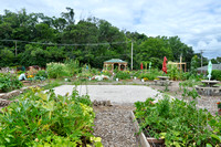 Fox Lake Community Garden 2017 12